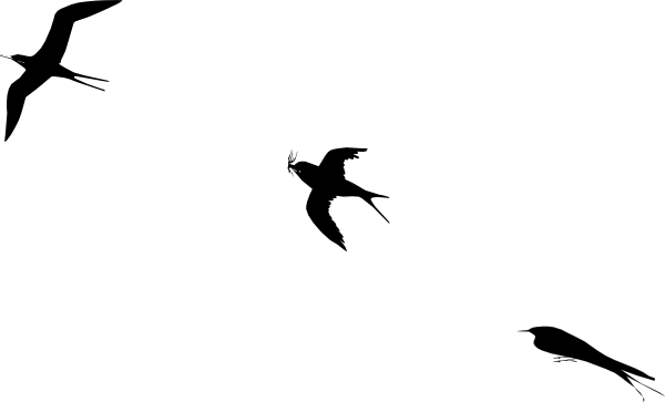600x363 Bird Flight Clip Art