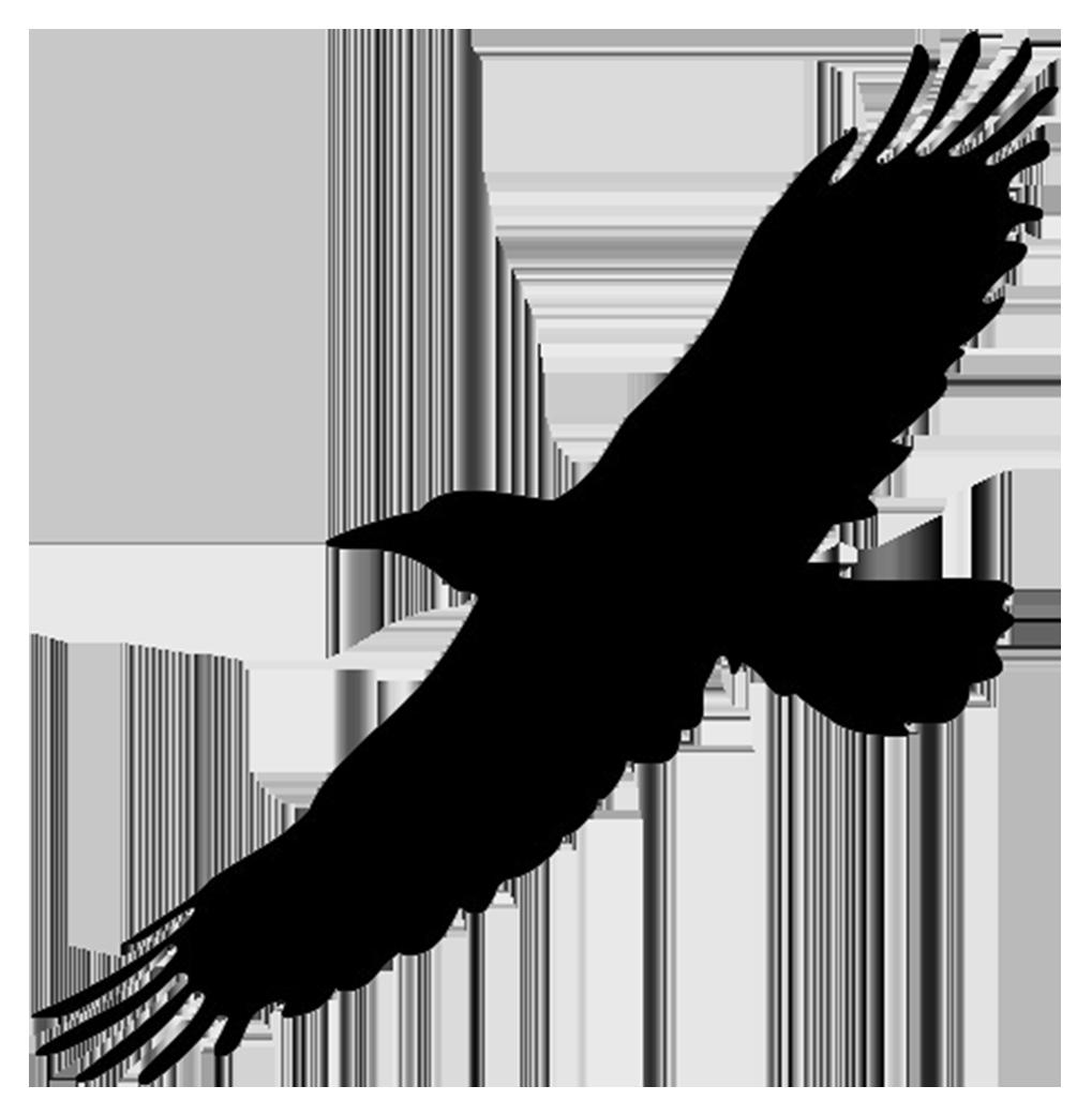 1019x1042 Bird Of Prey Clipart Flight Silhouette Clip Art