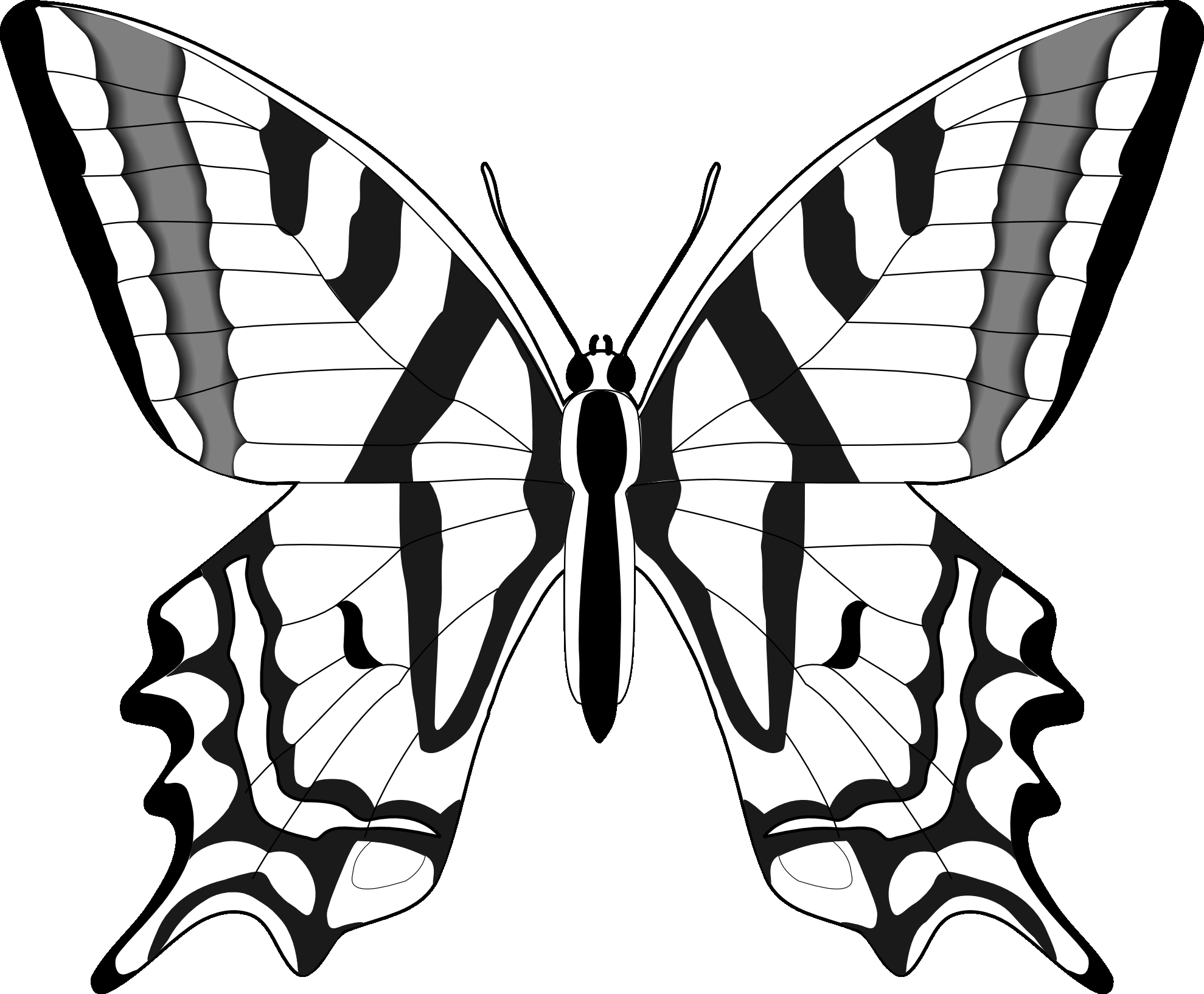 1979x1634 15 Black White Butterfly Pictures Collections Black