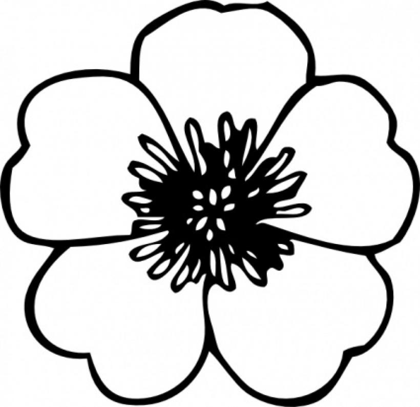 820x794 hawaiian flower clip art black and white clipart panda free