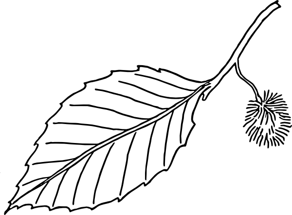 600x442 Leaf Black And White Leaf Black And White Leaf Clip Art Free