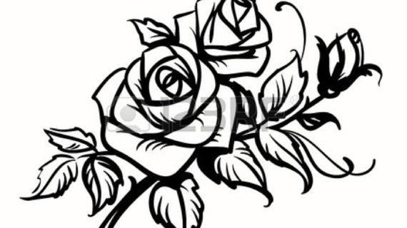 570x320 Rose Line Drawing Clip Art Knumathise Rose Clip Art Outline Images