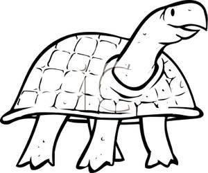 300x250 Turtle Clip Art Black And White Cliparts