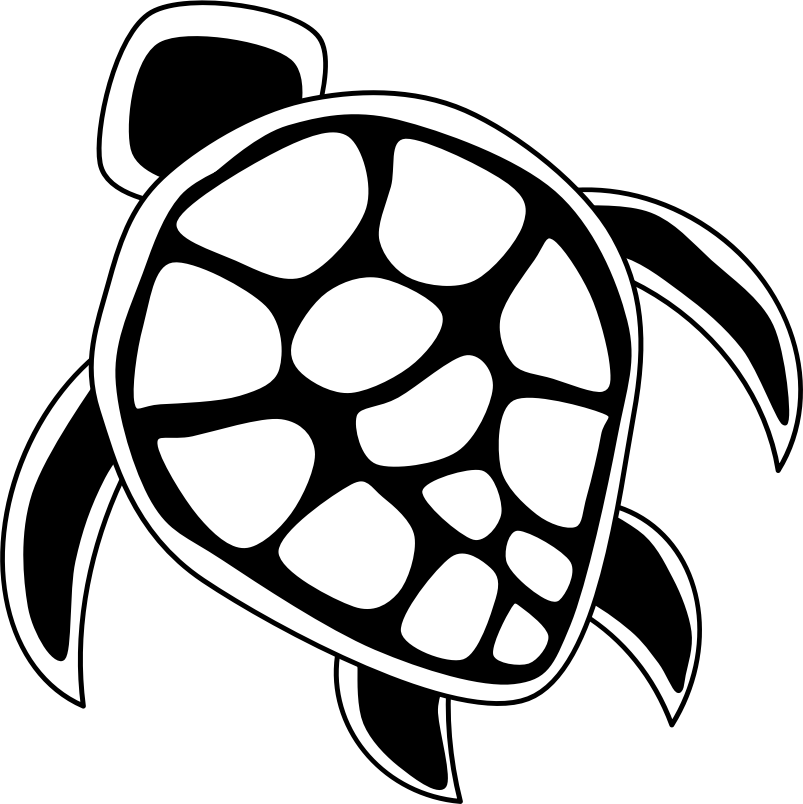 803x804 Turtle Clipart Line Drawing