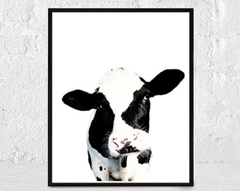 340x270 Cow Print Cow Art Black And White Cow Photography Horns
