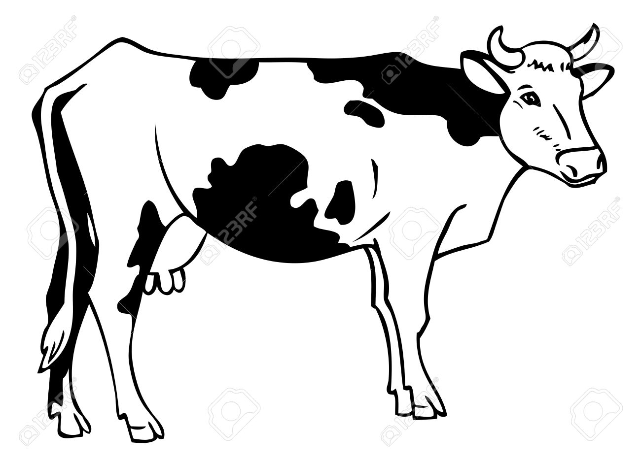 Black And White Cow Pictures Free Download Best Black And White