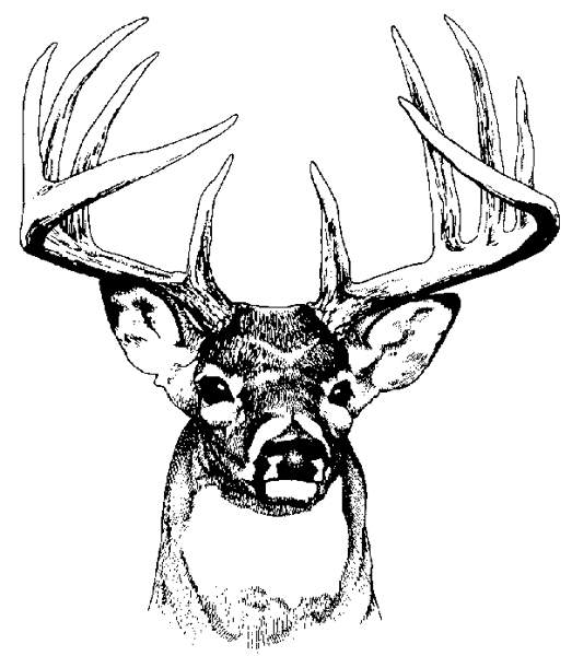 523x600 Deer Head Clipart Black And White