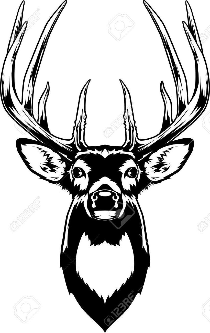 821x1300 Top Whitetail Deer Head Stock Vector Buck Image Images