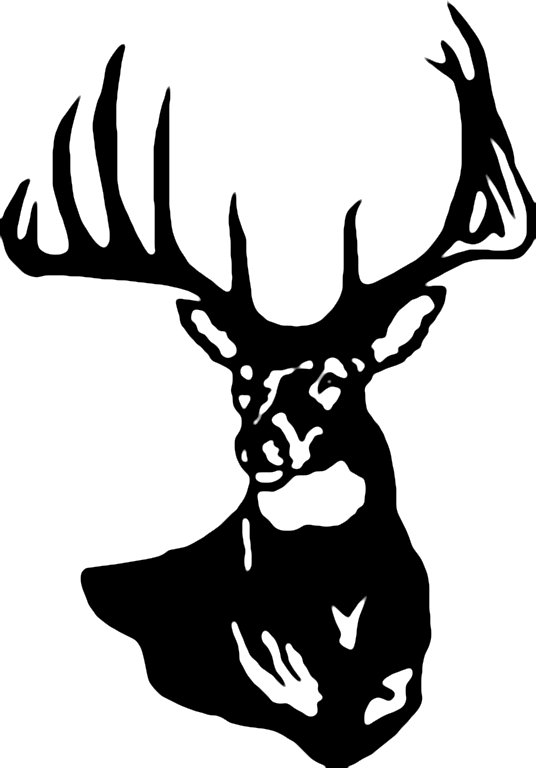 536x768 White Tailed Deer Clipart Stag Head