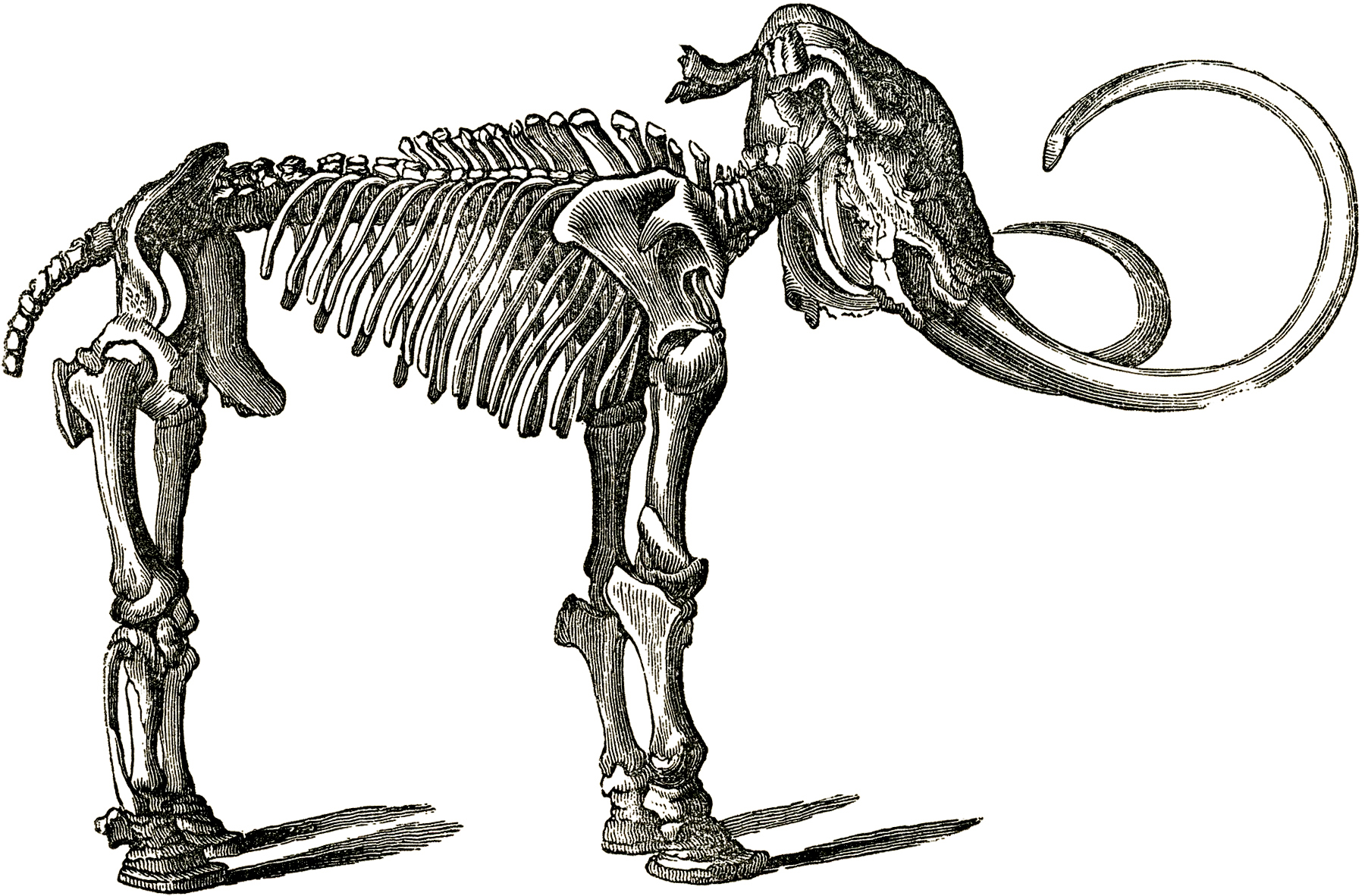 1800x1182 Dinosaur Clipart Black And White