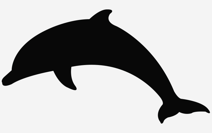 Black And White Dolphin Pictures