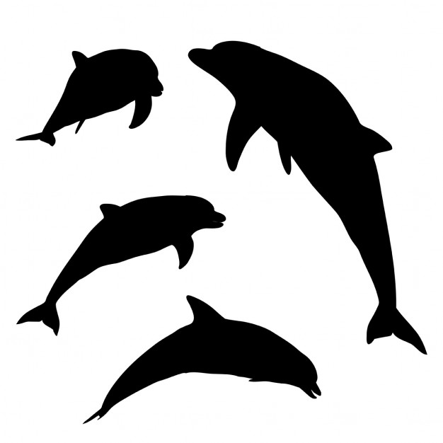 626x626 Silhouettes Of Dolphins In Various Poses Vector Free Download