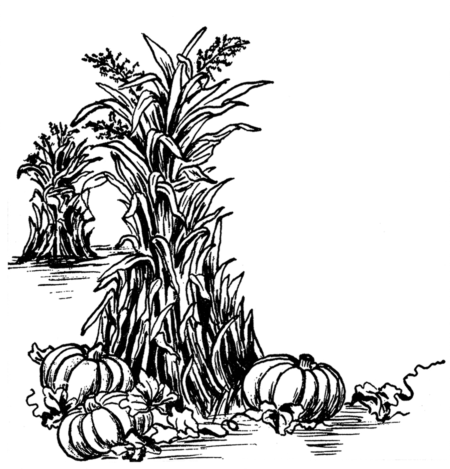 1500x1563 Fall Black And White Fall Harvest Clip Art Black And White