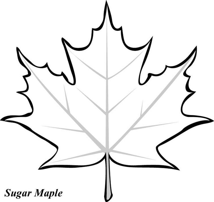 736x695 Leaf Printable Coloring Pages Leaves, Fall Leaves And Craft