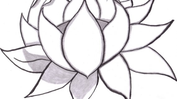 Black and white flower drawing free download best black and white 570x320 flower drawings simple black and white flower drawing clipart mightylinksfo