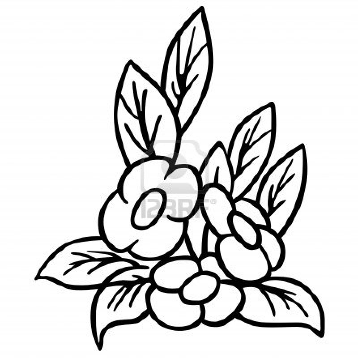 Black And White Flower Drawing Free Download Best Black And White