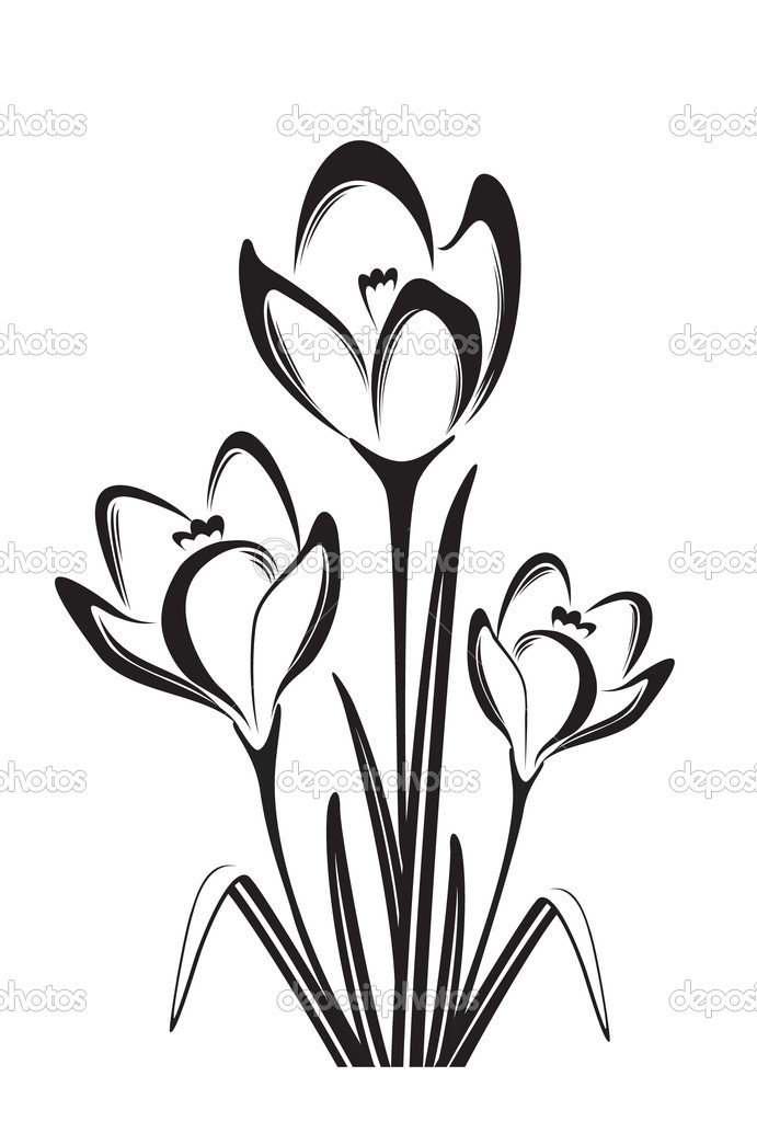 691x1024 Flower Black And White Drawing, Free Flower Black And White Drawing