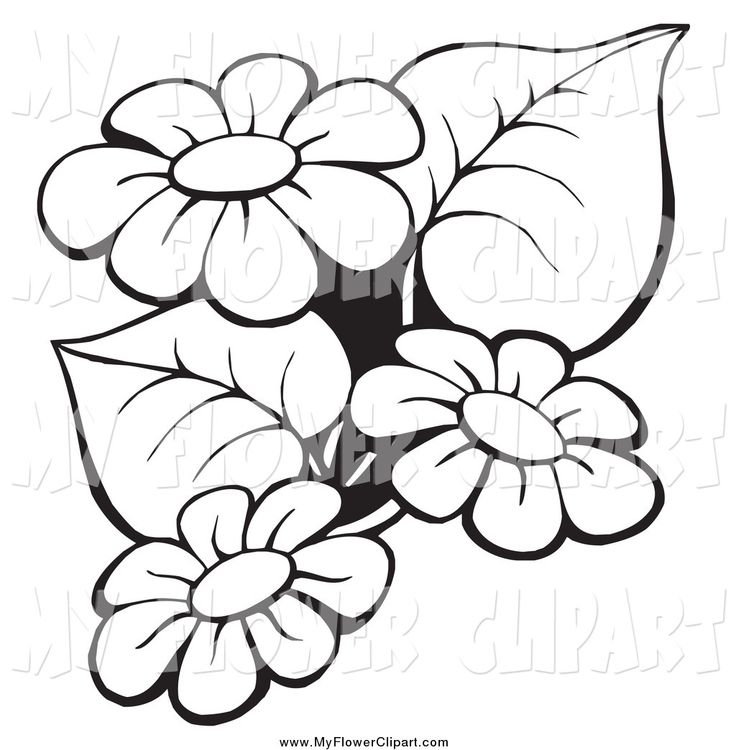736x750 White Flower Clipart Beautiful Flower