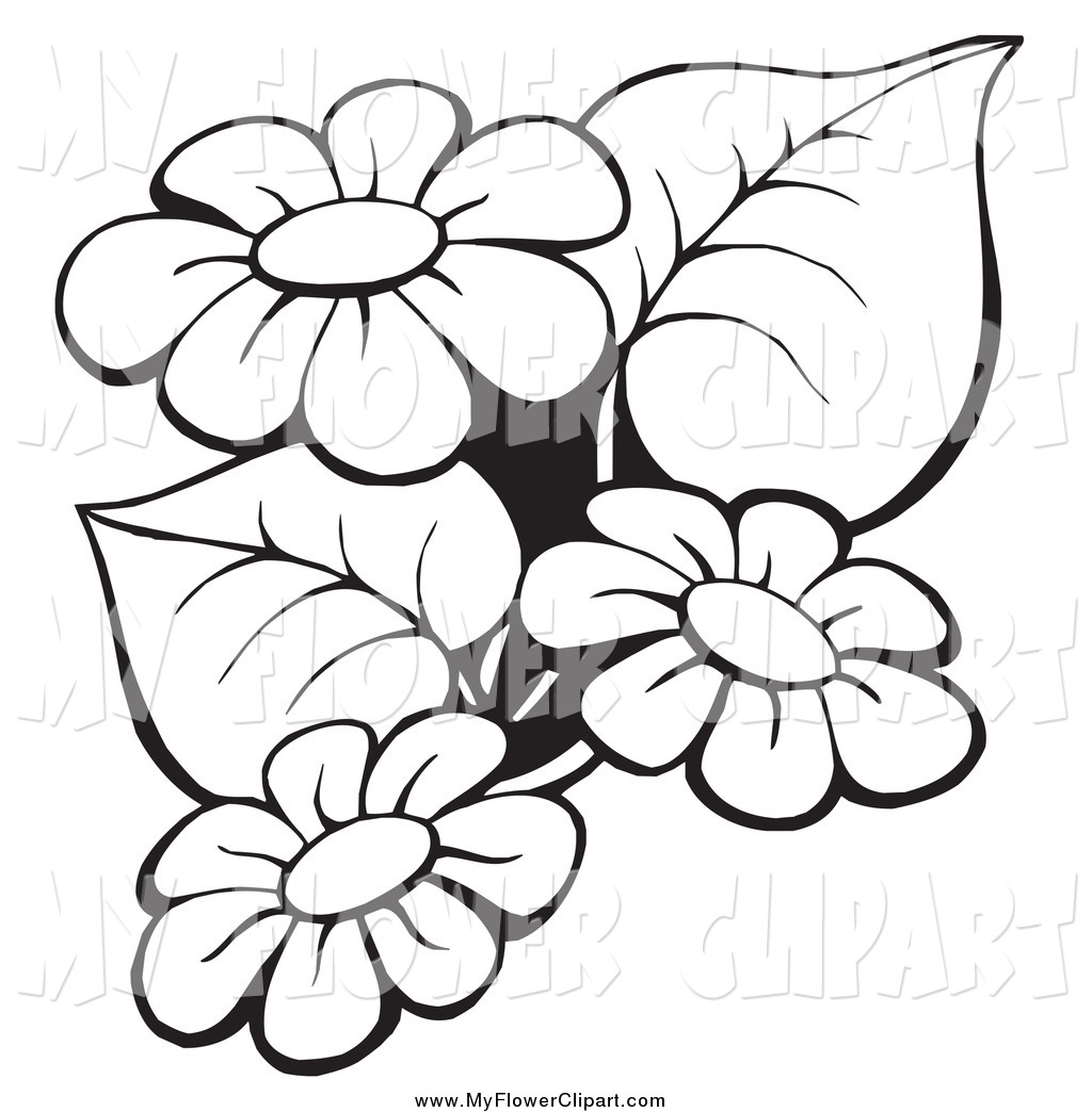 Black And White Flower Outline Free Download Best Black And White