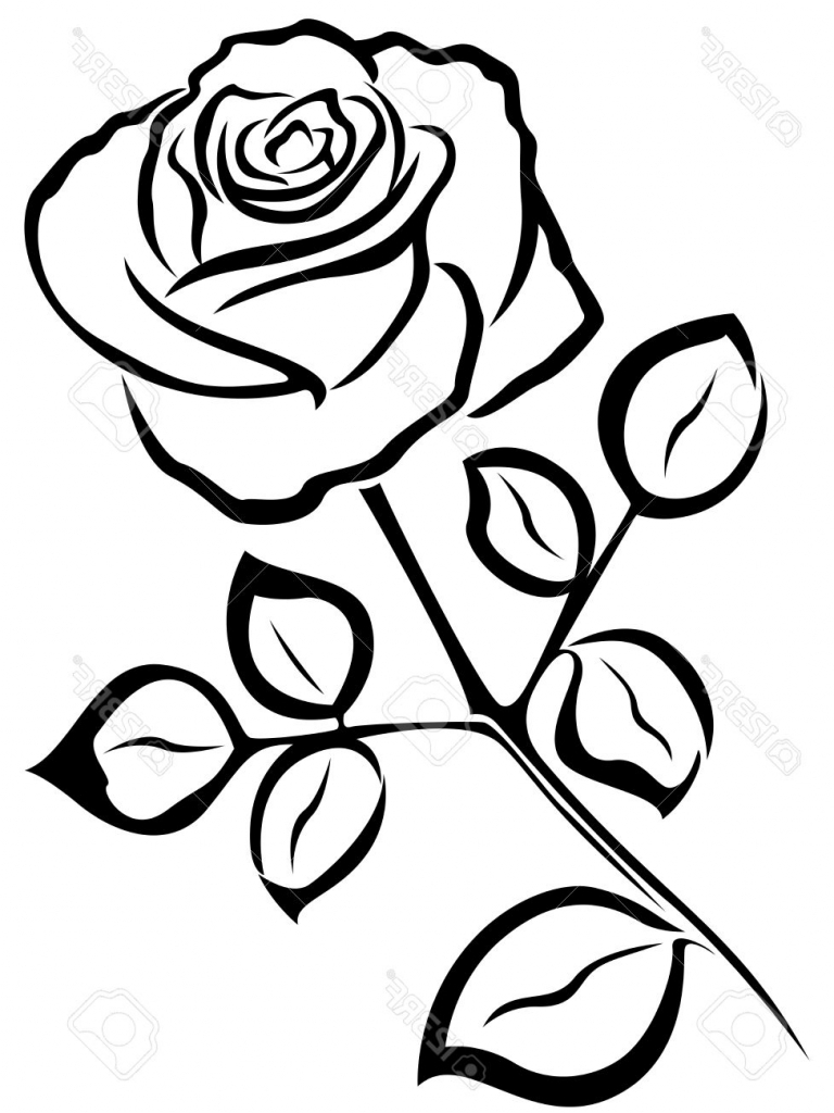 Black and white flower outline free download best black and white 768x1024 rose flower outline drawing black rose flower sketch bouquet idea mightylinksfo