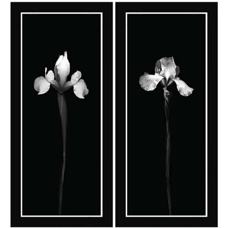 450x450 Cheap White Flower Wall, Find White Flower Wall Deals On Line