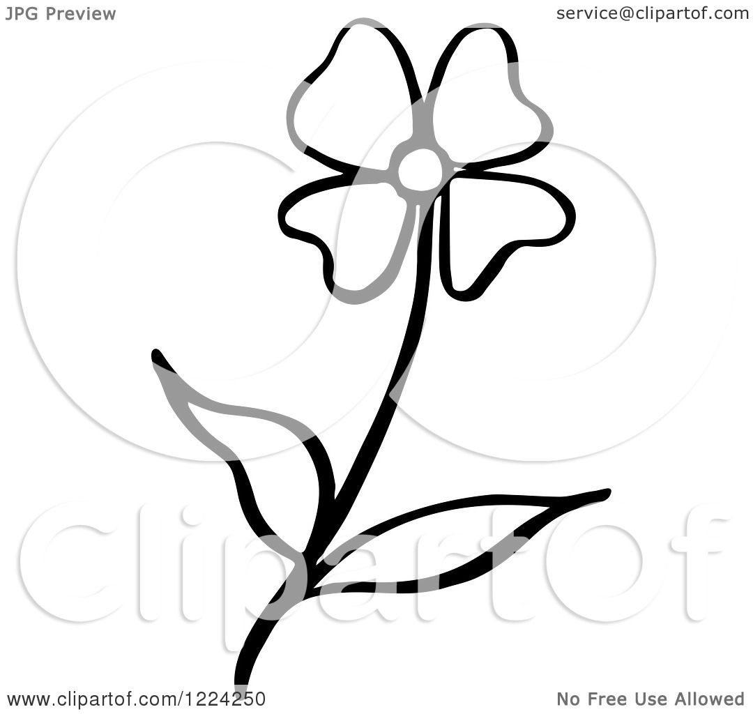 1080x1024 Clipart Of A Black And White Flower