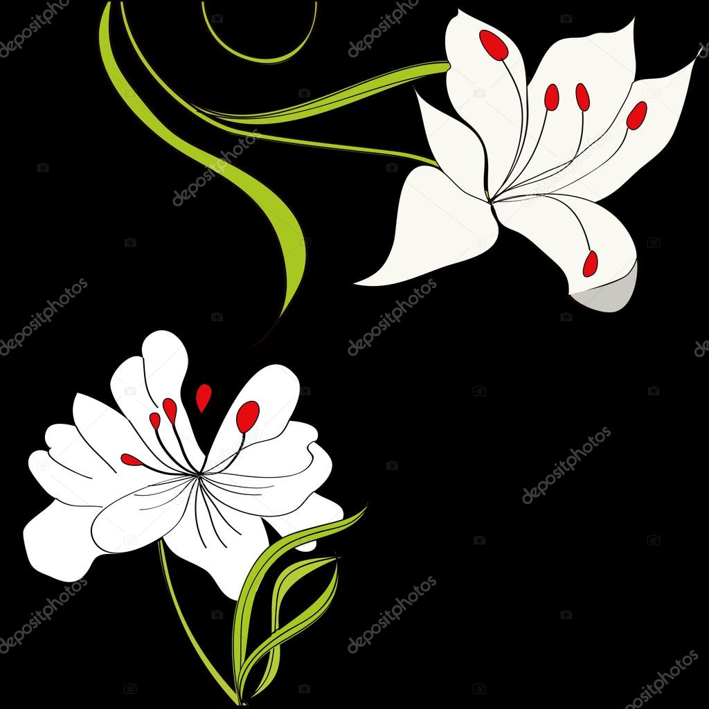 1024x1024 Black Background With White Flowers Stock Vector Jershova