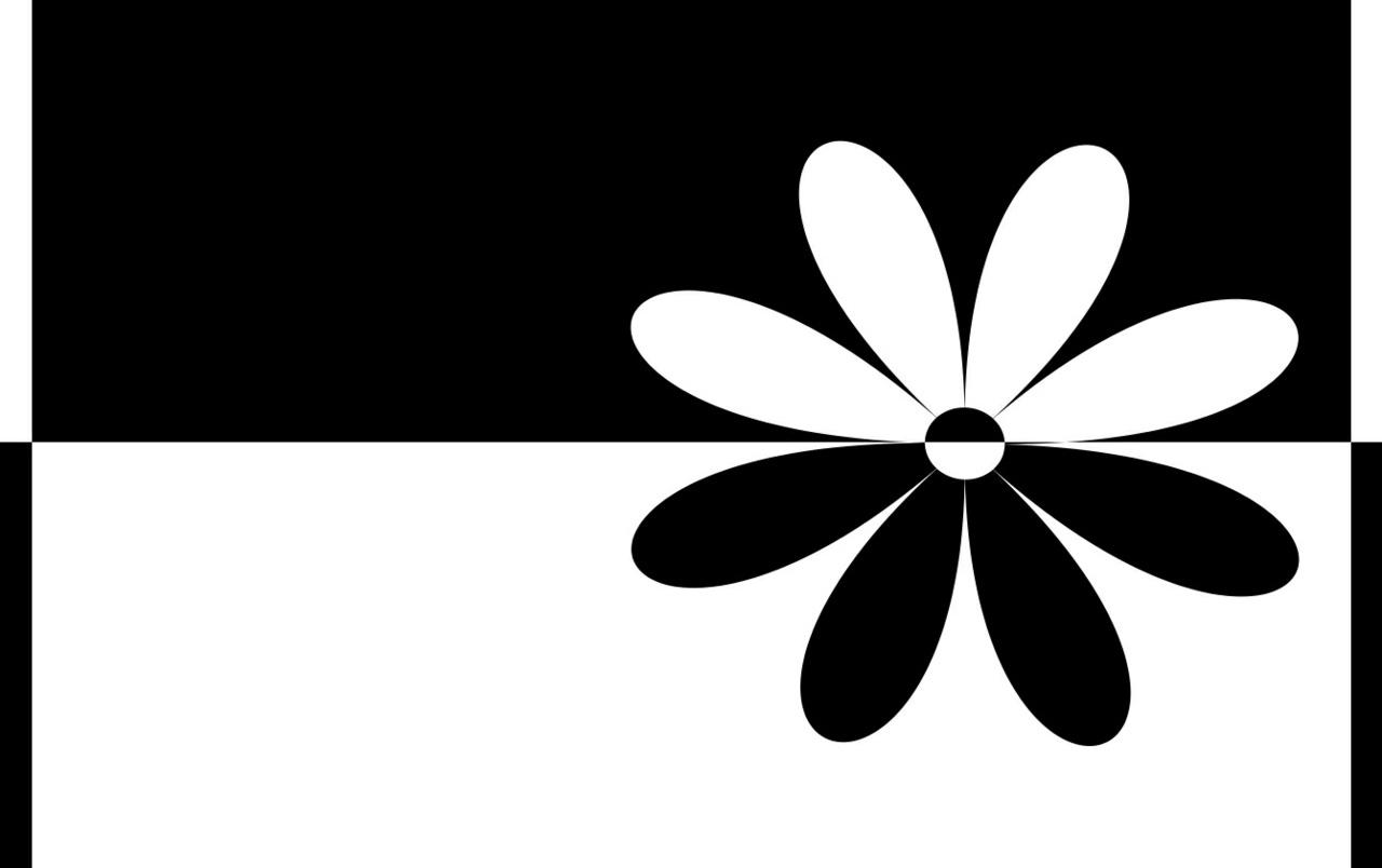 1280x804 Black White Flower Wallpapers Black White Flower Stock Photos