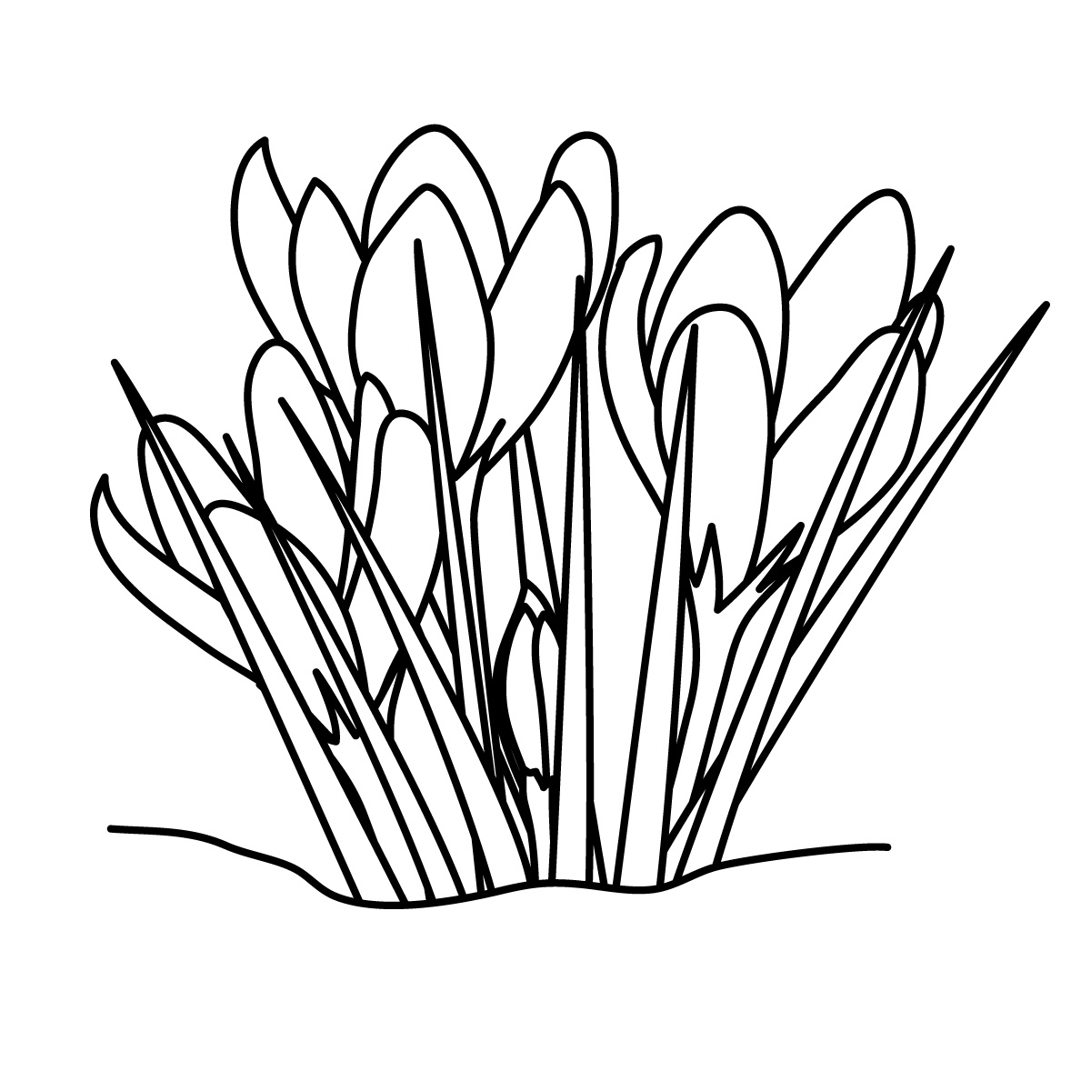 1200x1200 Grass Black And White Grass Clipart Line Drawing Pencil And