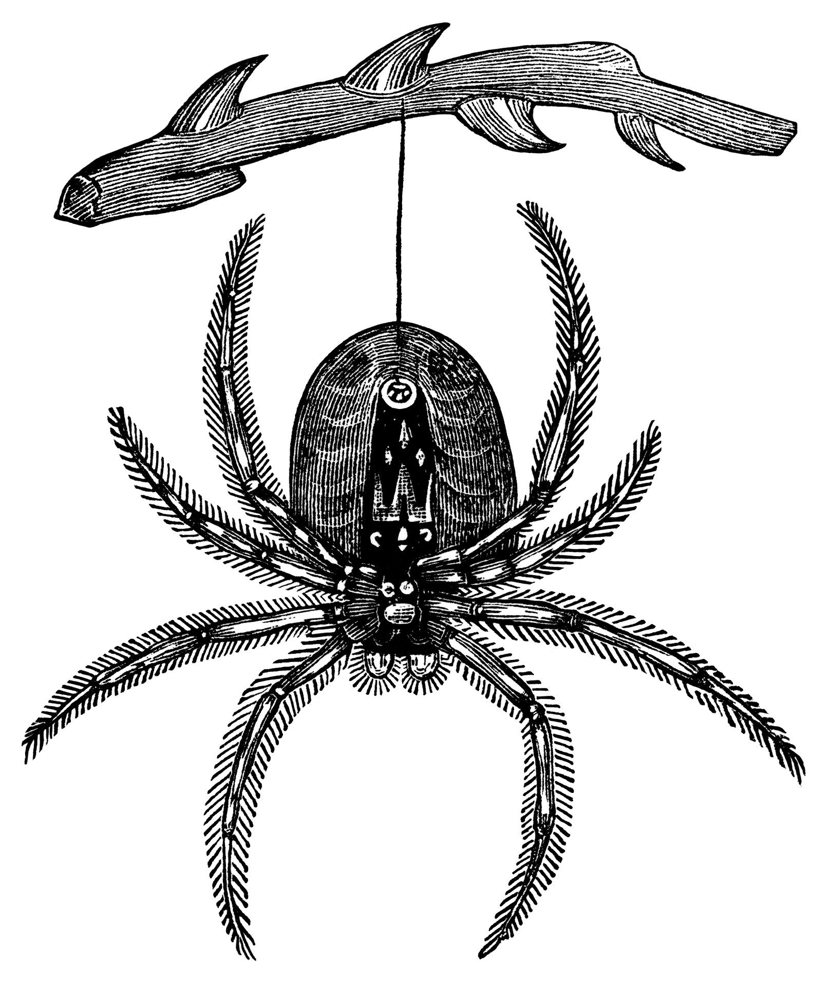 1614x1916 Hanging Spider ~ Free Vintage Clip Art Old Design Shop Blog