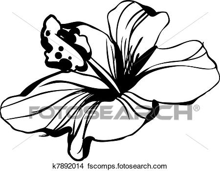 450x351 Clipart Of Sketch Blossoming Hibiscus Flower Bud K7892014