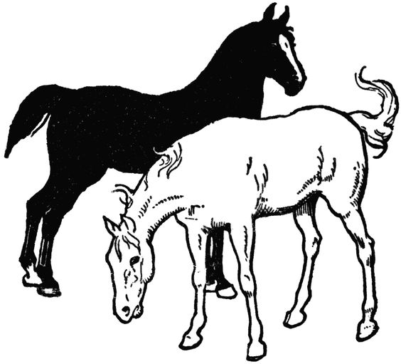 564x511 Black And White Horse Clipart