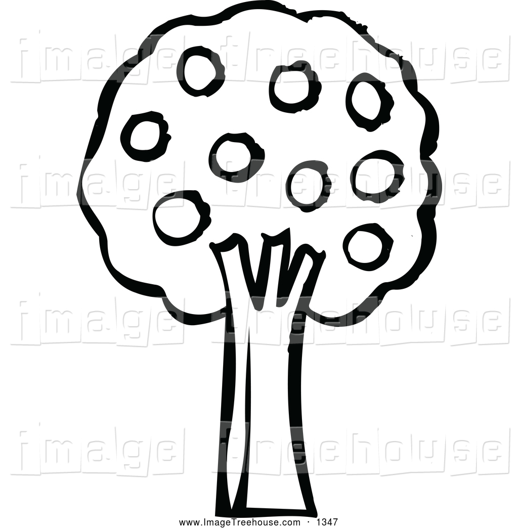 1024x1044 Best Tree Clipart Black And White