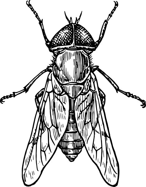 468x598 Drawn Insect Black And White