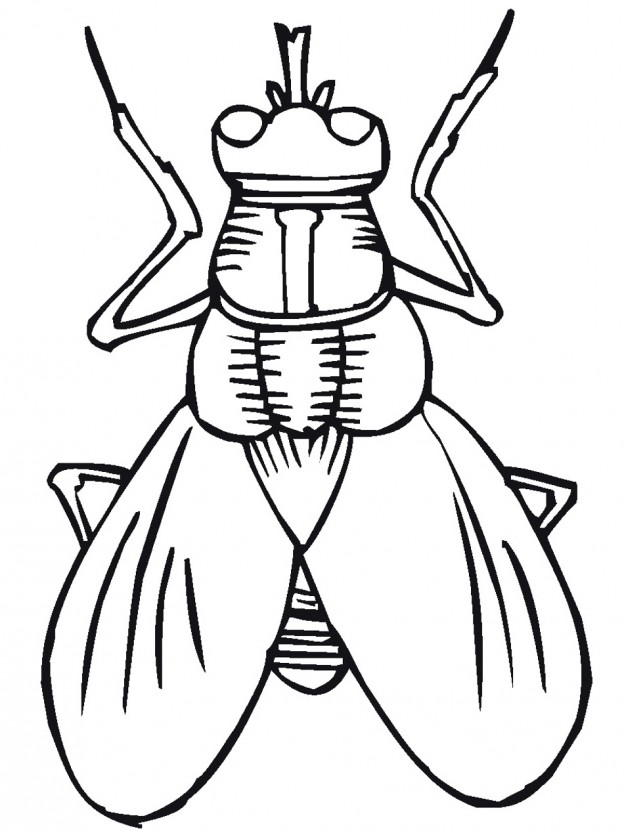 624x831 Printable Bugs Cliparts 247559