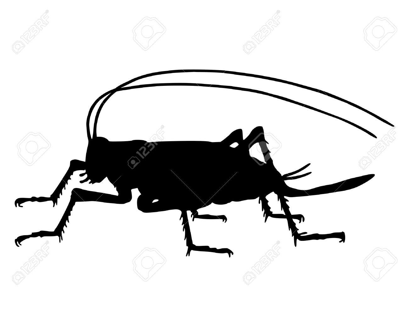 1300x1040 Grasshopper Clipart Black And White