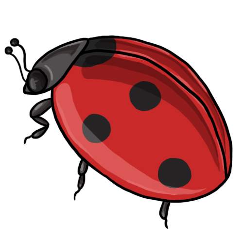 500x500 Free Ladybug Clip Art Drawings Andlorful Images 3