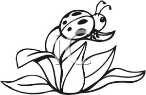 300x195 Art Image Black And White Ladybug On A Leaf