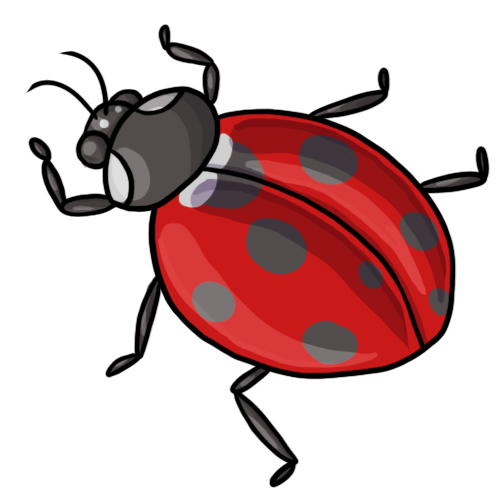 500x500 Ladybug Clipart Black And White Free Images