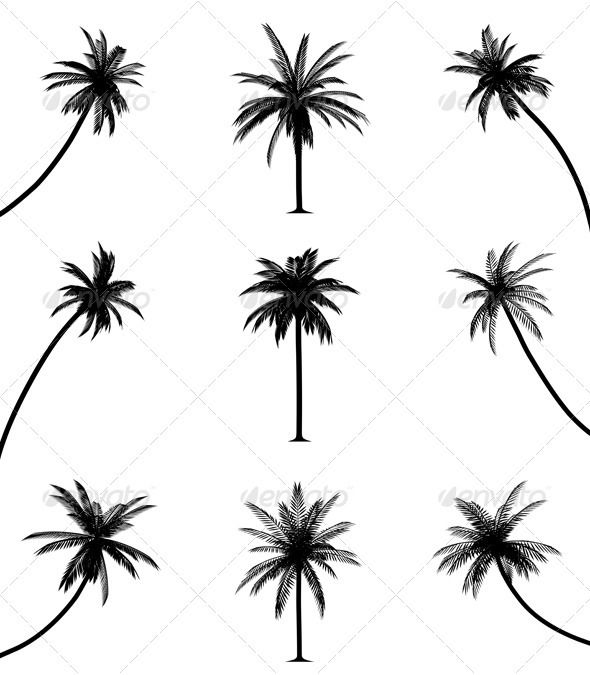 black and white palm tree