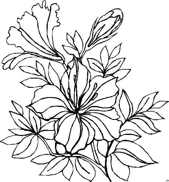 Black And White Pictures Of Flowers To Draw