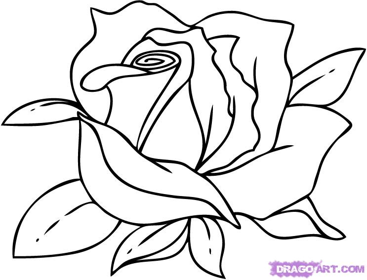 743x567 Drawn Red Rose Black And White Step By Step