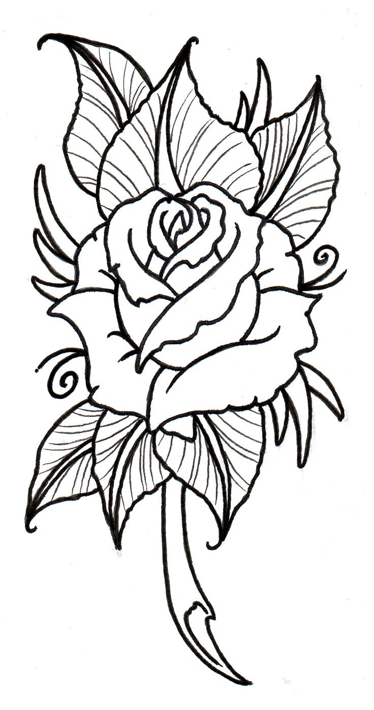 736x1397 Rose Flower Drawing Designs Black And White Line Drawing Of Rose