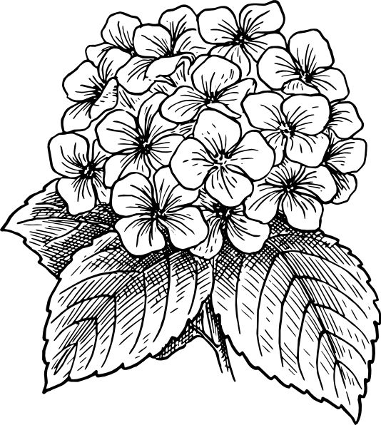 534x596 Black And White Drawings Of Flowers
