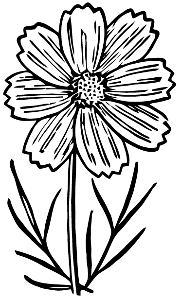 Black And White Plant Clipart