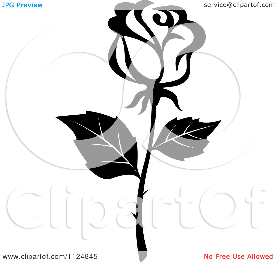 Black And White Rose Border Free Download Best Black And White