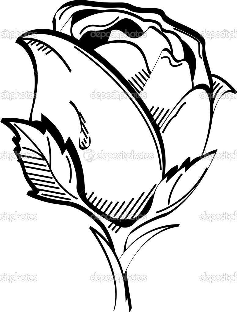 775x1023 Knumathise Rose Black And White Outline Images