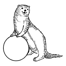 Black And White Sea Otter Pictures