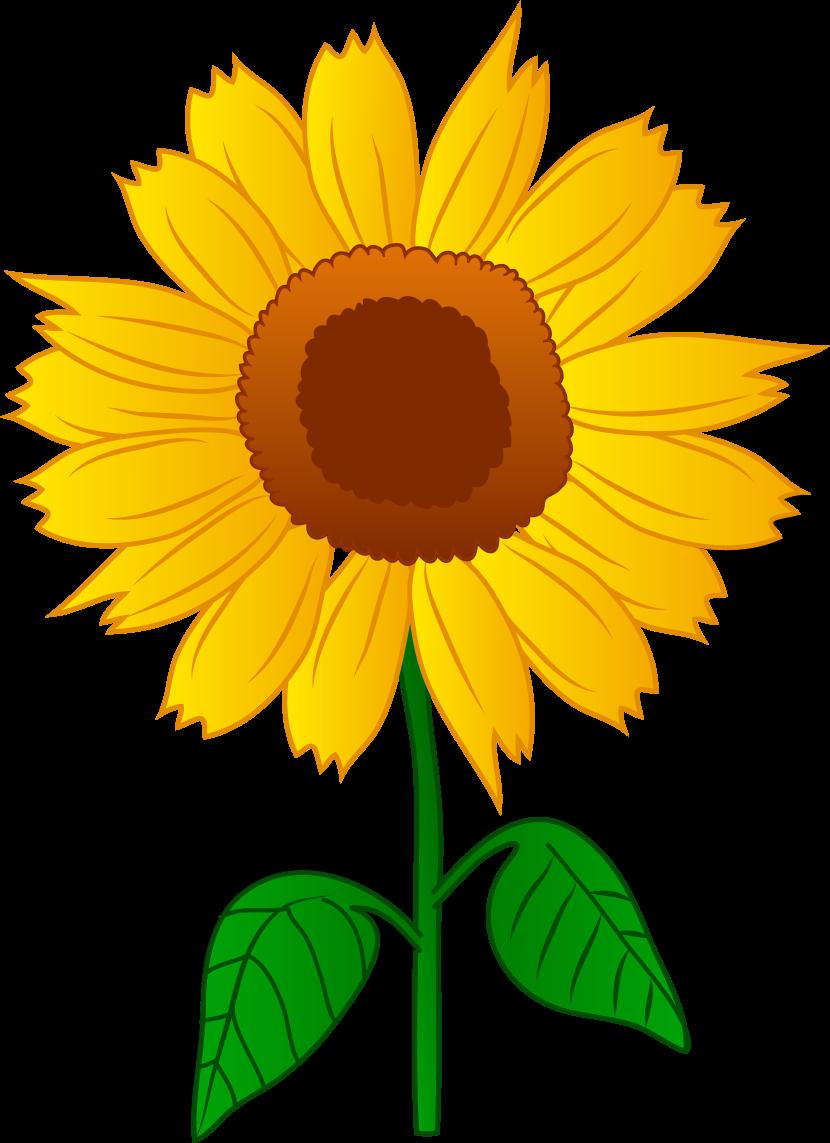 830x1143 Sunflower Clip Art