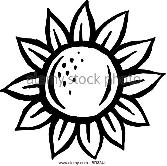 545x540 Cartoon Sunflower Stock Photos Amp Cartoon Sunflower Stock Images